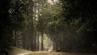 Forest Rain Summer Wallpapers Background Nature Rainy