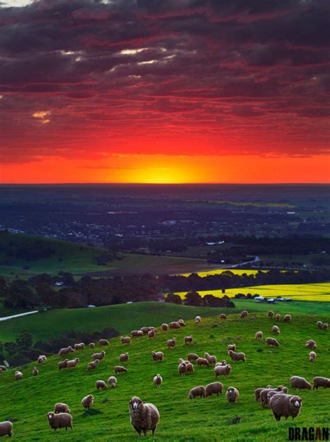 trip  australia  beautiful places   world