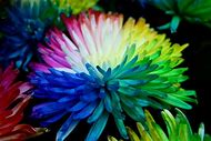 Multi Colored Real Flowers
