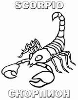 Coloring Scorpion Pages Preschool Printable Worksheets Animals sketch template