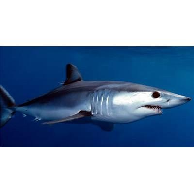 List Nation: 10 Most Badass Sharks In the World