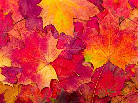 Autumn Images Is It Autumn Or Fall Merriam Webster