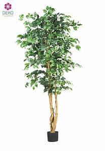 Ficus Benjamini Vermehren : k nstlicher ficus benjamini gr n ca 190cm ~ Lizthompson.info Haus und Dekorationen
