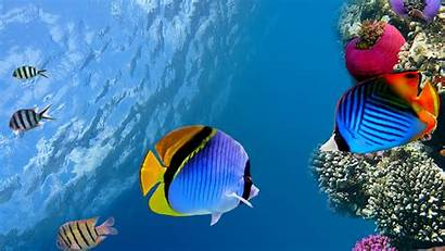 4k Fish Under Water Coral Ocean Sea