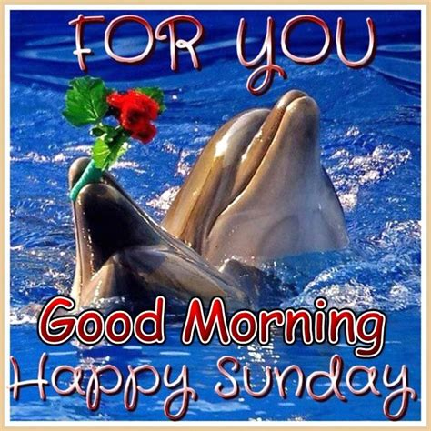 good morning happy sunday pictures