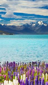 Wallpaper Lake Tekapo  New Zealand  Mountains  Flower  4k  Nature  16350