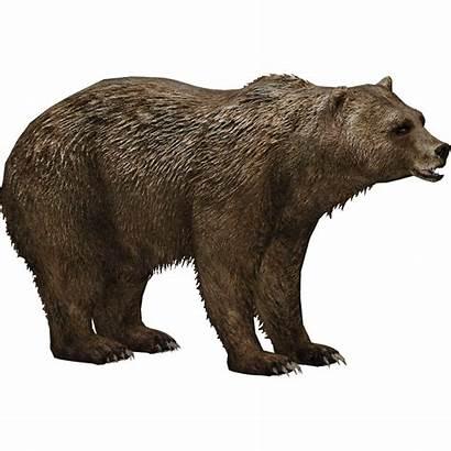 Bear Grizzly Fandom Wiki Zt2