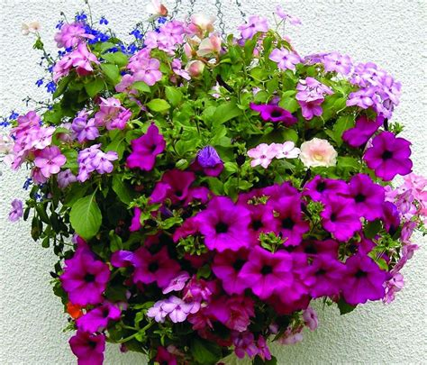 hanging flowers 25 best images about mother s day gifts on pinterest basket of flowers mother s day and usa