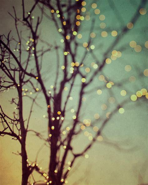 light lights sunset tree twilight twinkle image 86663 on favim com