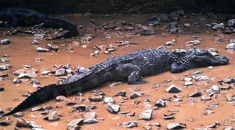 aligator cuisine directory of around myanmar