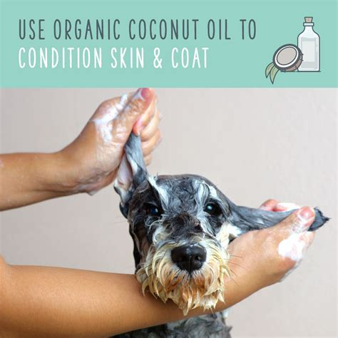 Coconut Oil For Dogs A Natural Remedy For Pet Health