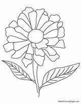 Coloring Zinnia Flower Yellow Drawing Sketch Getcolorings Printable Getdrawings sketch template