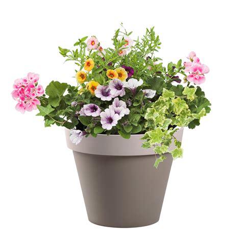 pot fleur pas cher