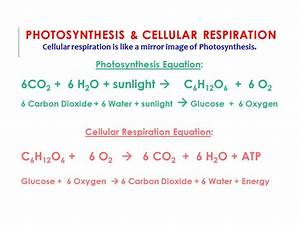 Chapter 4 Cells and Energy. - ppt video online download