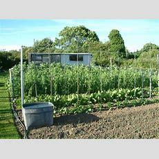 August Allotment Tips  Suttons Gardening Grow How