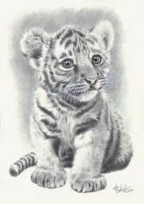 Wild Animal Pencil Drawings