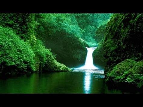 beautiful jungle  amazon rainforest youtube