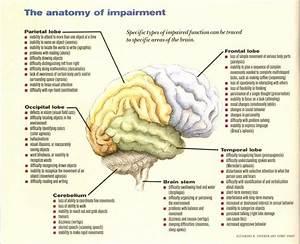 Brain Lobes Functions