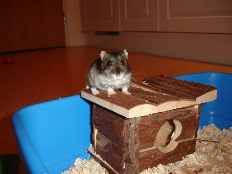 hamster accessories  supplies   owner