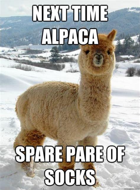 Alpaca Meme - next time alpaca spare pare of socks