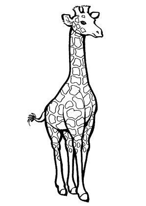 beste ausmalbilder giraffe tiere malvorlagen