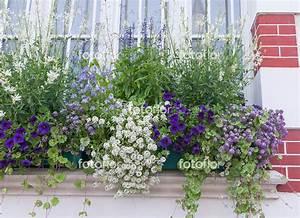 Jardiniere Fleurie Plein Soleil : photo de jardini re d 39 t en bleu et blanc bleu ~ Melissatoandfro.com Idées de Décoration