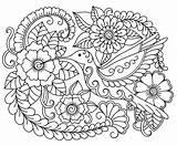 Premium Illustration Doodle Colibri Ornament Outline Coloring Bird Floral Draw Round Vector Hand sketch template
