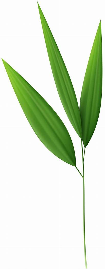 Clipart Bamboo Leaf Leaves Transparent Webstockreview Yopriceville