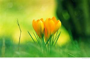 Awesome spring flowers wallpapers quote - Genius Quotes
