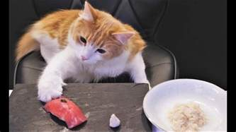 for cats sushi for cats