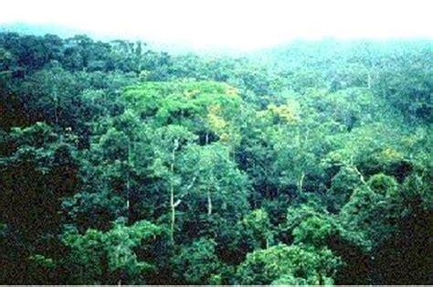 Loss Of Rainforest  Habitat Loss