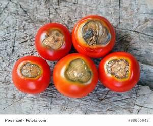 Tomaten Krankheiten Bilder : tomaten bl tenendf ule was tun mein bio balkon garten ~ Frokenaadalensverden.com Haus und Dekorationen