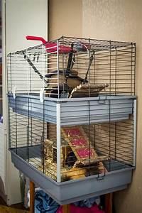 Cage A Cochon D Inde : donne donne 2 cochons d 39 inde cage et accesoires gratuit ~ Dallasstarsshop.com Idées de Décoration