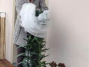 Balkonpflanzen Winterfest Machen : balkonpflanzen im winter emsa ~ Watch28wear.com Haus und Dekorationen