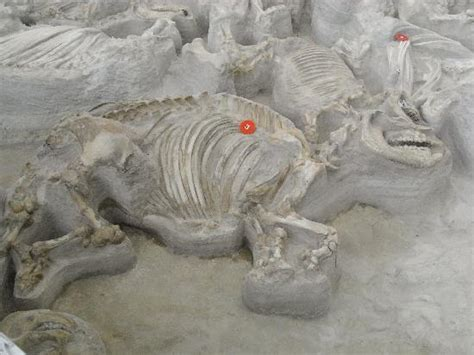 female rhino picture of ashfall fossil beds state