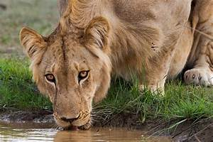 To Save Wildlife  African Governments Turn To Private