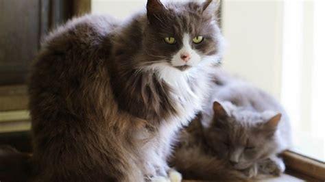 gatti alimentazione come nutrire un gatto anziano deabyday tv