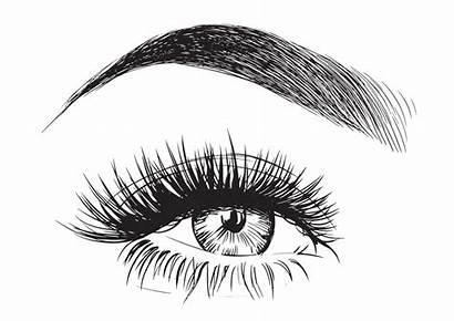 Eyebrow Eyelashes Vector Eyebrows Clipart Drawing Lashes