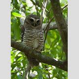 White Owl Baby | 500 x 699 jpeg 48kB