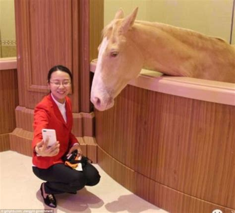 heilan horse culture museum worlds  luxurious stable daily mail