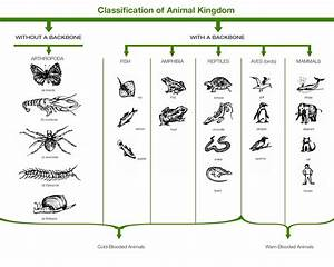 Classification of animal kingdom - Learn Three domains of life