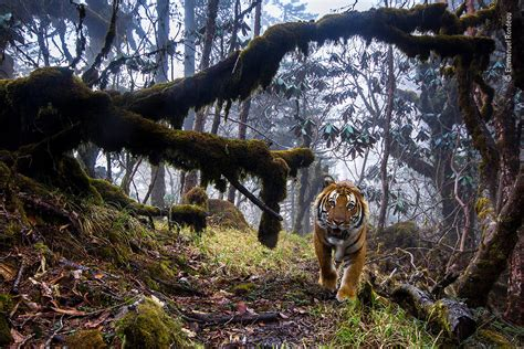 wildlife photographer   year  natural history