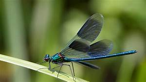 Dragonfly and Damselfly | San Diego Zoo Animals & Plants