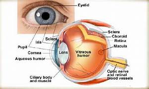 Do You Know All Eye Parts
