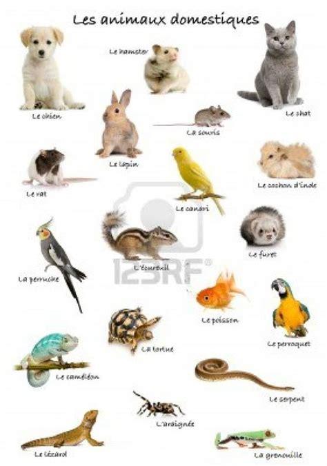 les animaux domestiques animaux domestiques animaux et fran 231 ais