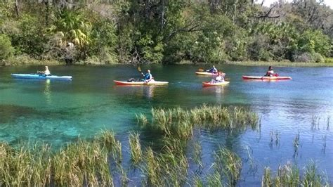 Crystal River Boat Rentals by Scalloping Crystal River Kayak Rental Paddle Board Fishing