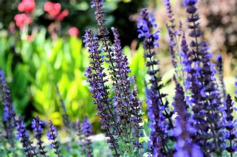 bloemen op ibiza de flora en fauna van ibiza