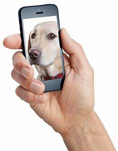 stock photo mobile cell phone dog isolated screen image