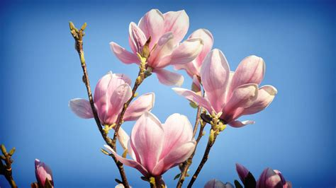 Beautiful Flowers  Wallpapers Inbox