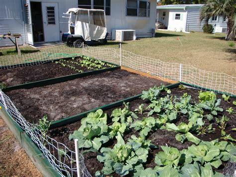 Vegetable Garden Florida Talentneedscom